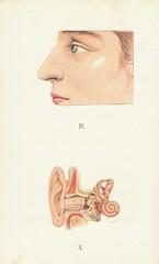 atlas anatomie 10