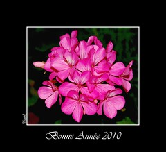 Bonne Anne 2010 (Daoud FLITES) Tags: family friends wishes flickrmembers flickerdz