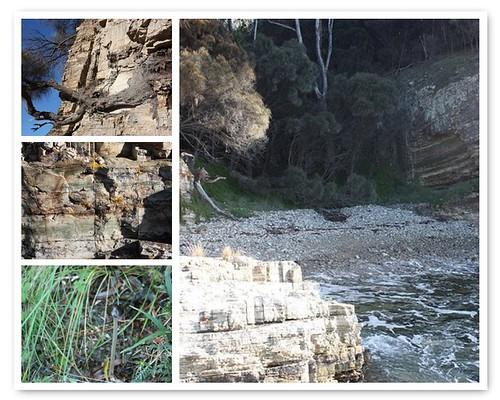 fossil cove 2