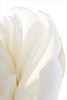Lotus petals - IMG_5693 (Bahman Farzad) Tags: white flower macro yoga petals peace lotus relaxing peaceful petal meditation therapy lotusflower lotuspetal lotuspetals lotusflowerpetals lotusflowerpetal