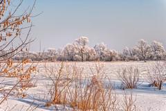 Polska Nad Bugiem 2- (peterpj) Tags: colorefexpro4 nawsi bug rivier natuur winter zima sony sigma