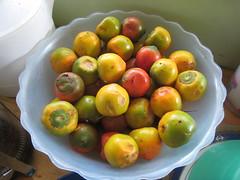 pejiballe (peh-ee-buy-ay) (rr0cketqueen) Tags: costarica concepcion choza lachozadelmundo