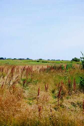 marsh landscape 1