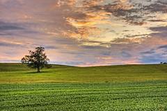 One Tree Hill (Matt Champlin) Tags: life sunset summer sky storm tree nature colors field rural canon landscape one dynamic farm country farming fields lonely distance hdr distant ruralscenes breakingup fieldtree eos40d onetreeinfield farmtree