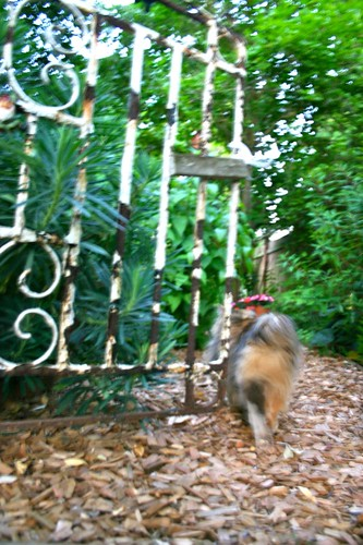 Frida guides us through the garden gate