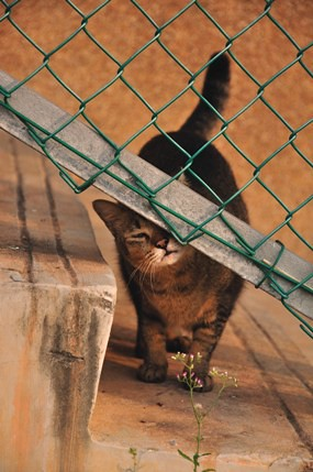 Mary_fence_20090214_008_DSC_0027x