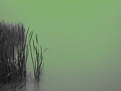 Green Lagoon (M.C. Martin) Tags: ohio green foggy cattails beforesunrise foggymorning greentint bythelake sciotovilleoh