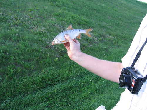 ...bet galima pasigauti žuvies...