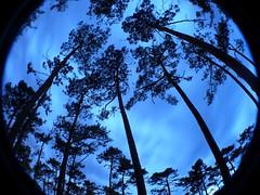 tree with fisheye (Math__) Tags: ocean longexposure light france tree night fisheye