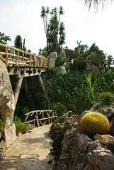 IMGP4982 (vivosi8) Tags: cactus cacti jardin monaco jardinexotique exoticgarden