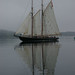 Bluenose by Kathy Powell