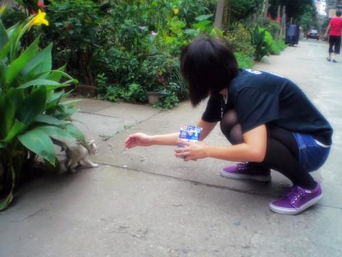 一日一貓,蛋友來稿:有媽的貓咪吃的飽