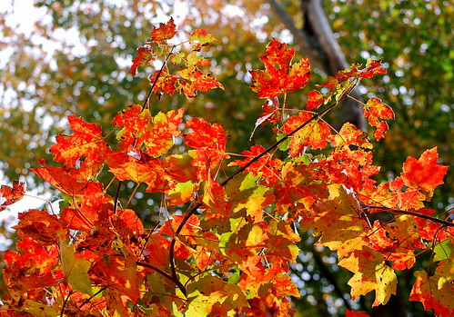 fall colors 5