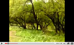 Youtube: 21-9-2009 Darbat Trees (Shanfari.net) Tags: flowers plants nature video al natural ericsson sony greenery cave oman videos salalah  youtube sultanate dhofar  khareef  haq       taqah     governate  madeinat  darbat taiq c905  raythut
