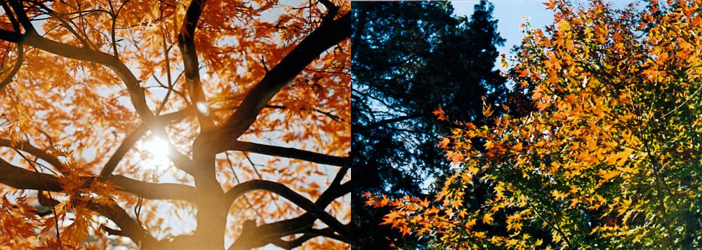 NYBG : Sun & Foliage
