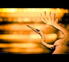 Asia | Macau: C'est made in Grand Lisboa casino~ (Vu Pham in Vietnam) Tags: china travel hk hongkong asia southeastasia action bokeh candid casino macau vu     grandlisboa bokehlicious  bokehwhores chu raininvietnam hkwalk commentwithimageswillbedeletedsosorryforthis