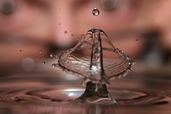 When Water Drops Collide (laszlo-photo) Tags: macro mushroom water umbrella jellyfish action flash drop 5d speedlight collision canoneos5d sigma105mm 580exii waterdropcollision