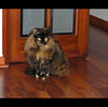 María Pía, with a better haircut... (LinoPhilippe) Tags: chile santiago cats d50 catwomen chats nikon kitten feline chat kitty gatos gato felino katze nikkor gatto katzen kot katz matou chatte chaton hauskatze 1855mmf3556 sigma70300f456dgmacro