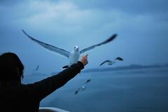 DSC_0840 (pottiri12) Tags: matsushima  uppy