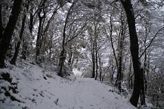 Wood (X@d00m) Tags: road wood winter white snow cold ice nature strada snowy path neve sentiero inverno bianco freddo bosco ghiaccio innevato