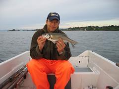 Havabbor (Seabass) fra Oslofjorden (Espen rud) Tags: fish canon fishing gear equipment rod top100 top10 top20 reel lightroom fiske top50 fiskeutstyr bestof2011 bestof2012
