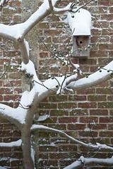 20091220_sneeuw_007 (geertr) Tags: sneeuw thuis 20091220