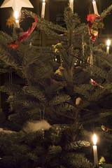 Up close (Mirovich) Tags: christmas tree birds denmark nikon d70 træ christmastree ornaments jul danmark 2009 roskilde juletræ pynt fulge normangran
