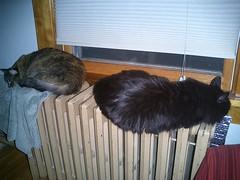 radiating cats