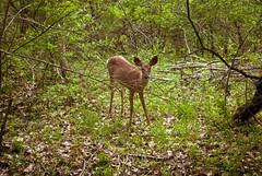 (pyrosarco) Tags: nature south hill chapel sage deer trail ithaca richmullins ephesians3 commanderzeroyoucraze