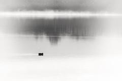 Paperetta solitaria (Sascha Fiori) Tags: papera stagno acqua biancoenero black white natura foschia minimal sardegna