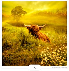 Behind The Bush... (Gert van Duinen) Tags: cow digitalart vaches schotsehooglanders kollumerwaard dutchartist groningerlandschap realmagic fantasylandscape specialpicture lauwersmeergebied gertvanduinen colorsofthesoul saariysqualitypictures graphicmaster obramaestra oudelauwerszee explore3on20090702 zoutkamperplaat ineedsomecouncil