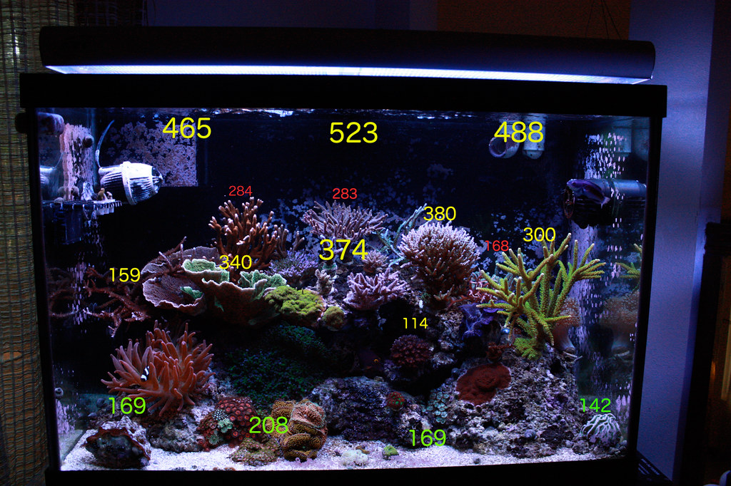 My Second Tank Is A 20l Lit With 4 Bulb Ati Pm The Fixture Situated Above Water S Surface Combo Front Blue Plus Fiji Purple