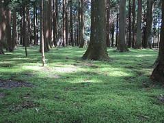 IMG_0905 (amyarchivist) Tags: japan temple matsushima