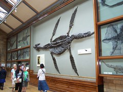 Plesiosaur, Natural History Museum, London
