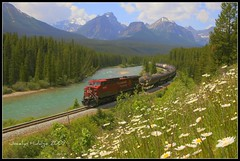 "And finally..........Choo choo....the train came. (Joalhi ""Back in Miami"") Tags: canada train alberta banff bowvalleyparkway morantscurve"