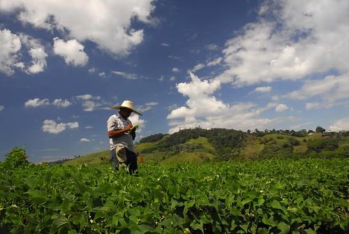 Beans - Darien, Colombia