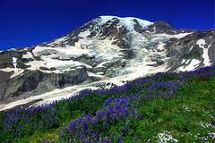 Mt Rainier HDR 3374 (Fresnatic) Tags: flowers summer snow mountains volcano washington paradise explore rainier glaciers pacificnorthwest nationalparks mtrainier hdr mtrainiernationalpark photomatix canonrebelxsi fresnatic
