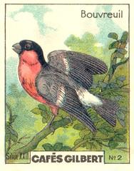 gilbert oiseau 1