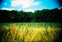Corn field (kevin dooley) Tags: auto color green film window field grass car yellow mi 35mm lens book lomo xpro lomography corn cornfield slim cross shot wine kodak michigan farm cam country wide lakeside plastic 100 roadside agriculture cheap viv vivitar processed ultra uws ebx barrien vuws soiuthwest vivalaviv book0