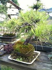 My father's BONSAI Garden