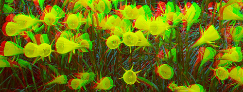 Eden Garden 15 in 3D