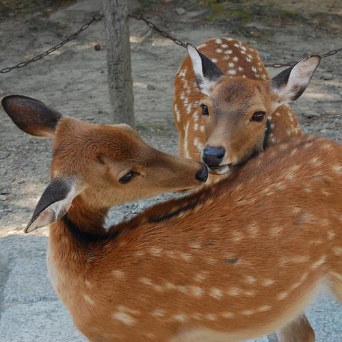 Nara by ~ nebe ~
