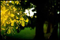 (.drew (Andrew Kelly)) Tags: tree green london film me 50mm golden leaf xpro fuji f14 crossprocess drew super negative epson pentaxmesuper provia 2009 400x 4490 fujiprovia400x andrewkelly entax