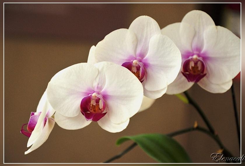 все о цветах все об орхидеях фото