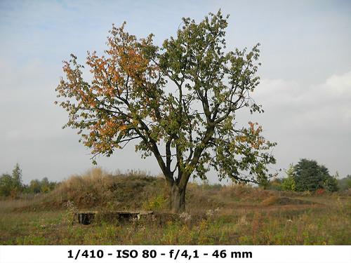 !Nikon 1000pj-test-1.410-ISO80-F4.1-MM46 copy