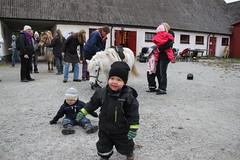 De små killarna och den lilla hästen