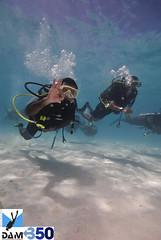 Maldives Unerwater Cabinet Meeting (Seeneen.Photography) Tags: ocean blue water coral photography nikon underwater scuba diving 350 reef maldives climatechange globalwarming aquatica carbondioxideemissions maldivesphotos mohamedseeneen mohamedseeneengmailcom presidentmohamednasheed maldivesunderwatercabinetmeeting 350partspermillion maldivesunderwaterphotography aquaticahousingfnikond80 imagesformaldives underwatercabinetdivemaldives