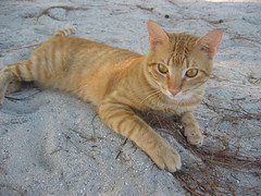 the island kitty- bring some extra cat food!