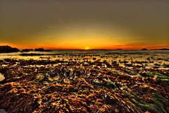 Laguna beach sunset at low-tide (ryotnlpm) Tags: sunset orange seaweed coral sunrise canon dawn dusk tide low sigma wideangle lowtide laguna 1020mm lagunabeach
