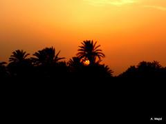 Sunset (Photo Pas'ion) Tags: pakistan sunset orange sun dates karachi sindh photographypassion awajid